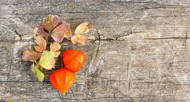 orange vinterkörsbär