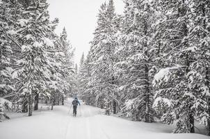skidåkning på vintern foto
