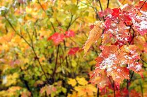 bakgrund början av vintern foto