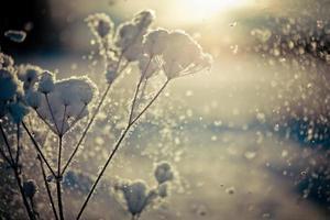 vintergren täckt med snö