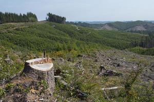 tydlig skog, tecken på återplantering