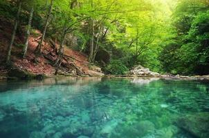 sjö i skogen