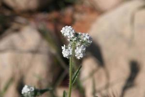vita vildblommor foto