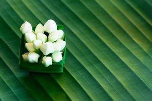 färsk vit jasmin på grönt bananblad foto
