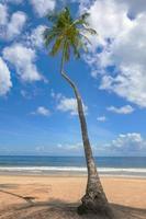tropisk strandpalmträdtrinidad och tobago maracabukten foto