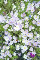 vilda blommor som blommar foto