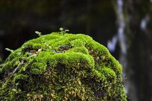 moss vattenfall på berget foto