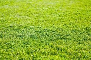 grönt gräs fält foto