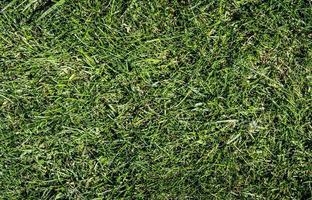 grönt gräs bakgrund foto