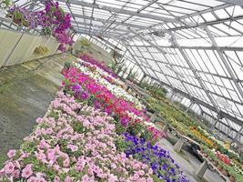 växthus med färgade blommor från olika vinklar foto