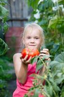 skördar tomat foto