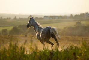 galopp med häst i solnedgången foto