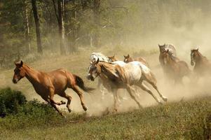 vilda hästar foto
