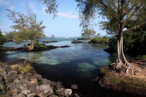 carlsmith beachpark, hilo, hawaii foto