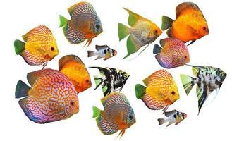 grupp fiskar foto