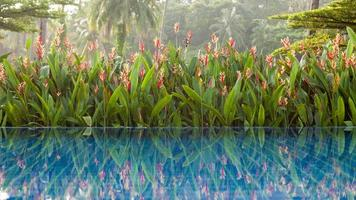 pool bredvid en tropisk trädgård