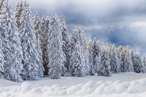 fôret sous la neige