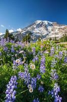 montera regnigare och vilda blommor foto