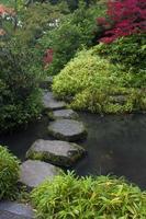 kliva stenar genom vatten foto