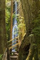 marymere falls och trail foto