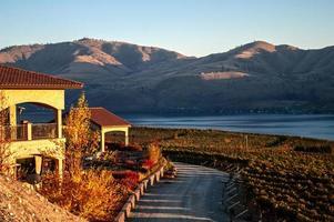 utsikt över Benson vingård foto