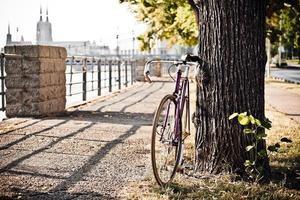 väg fast cykel på stadsgatan under träd foto