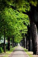gå körfält i staden med träd foto