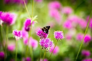 fjäril och blommor