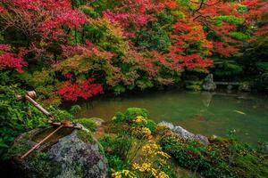 japansk trädgård på hösten