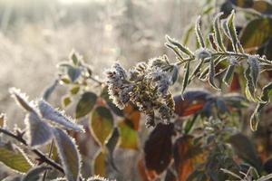 första frost foto