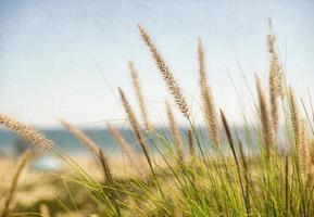 havsrör på manhattan stranden foto