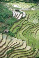 terrasserade risfält i sapa, lao cai, Vietnam foto