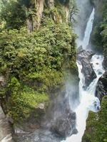 allé av vilda vattenfall för orkidéer foto