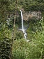 aveny av orkidéer vattenfall trädram foto