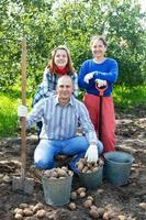 familj med skördade potatis