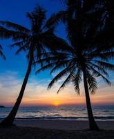 fin solnedgång. tropisk solnedgång, palmer foto