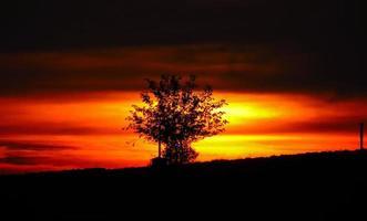 solnedgång med en trädkontur vid solnedgången