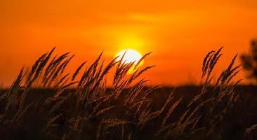 vacker solnedgång reflektion foto