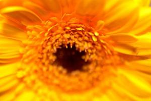 ljusgul blomma. foto