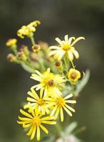 höstens vilda blommor foto