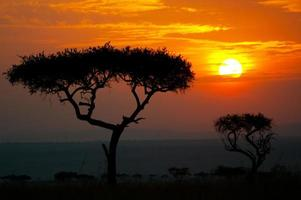 solnedgång i Afrika