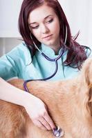 kvinnlig veterinär som undersöker hund foto