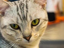porträtt av kvinnlig katt