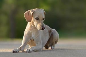 vacker ung kvinnlig hund foto