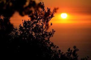 solnedgång genom grenar foto