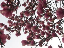 träd i blommor foto