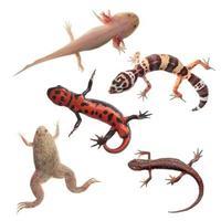 uppsättning amfibier och reptiler isolerad på vit bakgrund