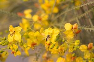 fluga och blommor foto
