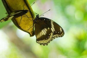 fjäril i tåg graden park foto