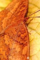 närbild av en fjäril foto